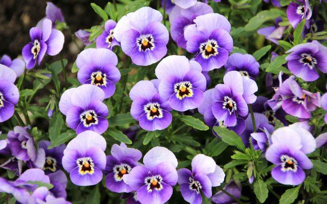 flowers-200270_1920